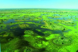 Die Weiten des Okovango-Deltas